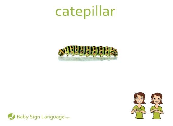 caterpillar sign