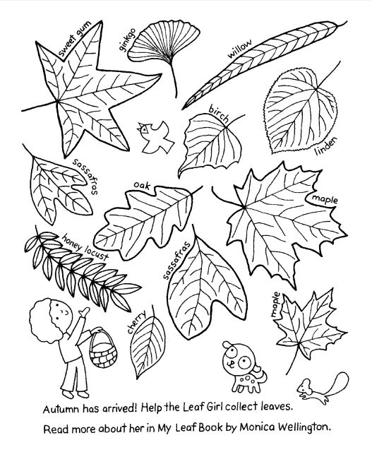 My Leaf Book by Monica Wellington - click pic to open 1-page PDF